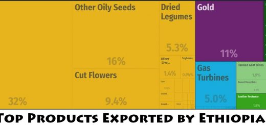 Top Products Exported by Ethiopia